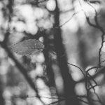 fotograficke-prace-ziakov-dama-mk-1.jpg